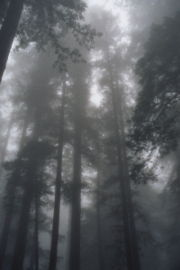 Muir Woods National Monument 1.JPG