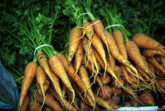 Harvested carrots